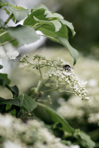 climbinghortensiabees-2