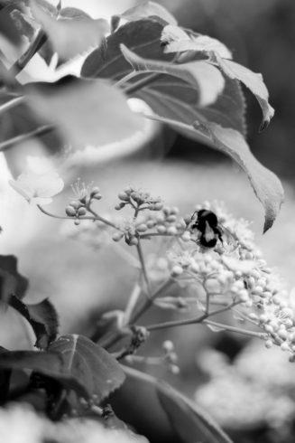 climbinghortensiabees-3