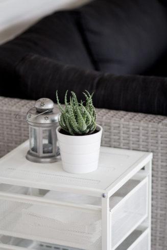 växter på altan