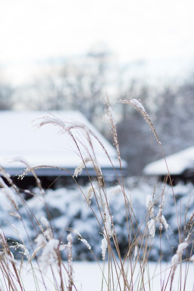 vinter i min trädgård