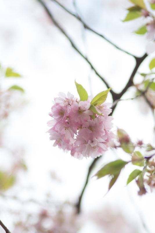 rosa blom och kvistar