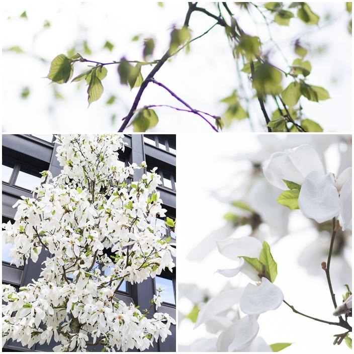 valborg och magnolia