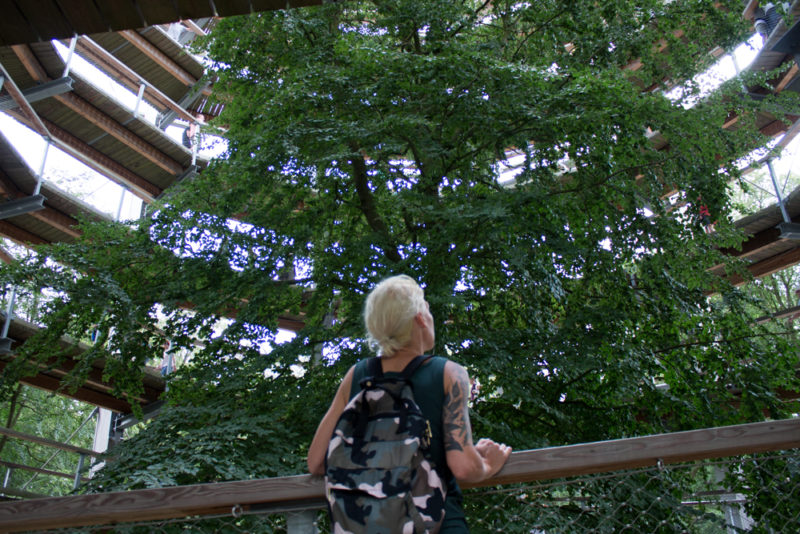 trädtoppspromenad