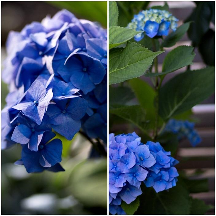 blommande blå